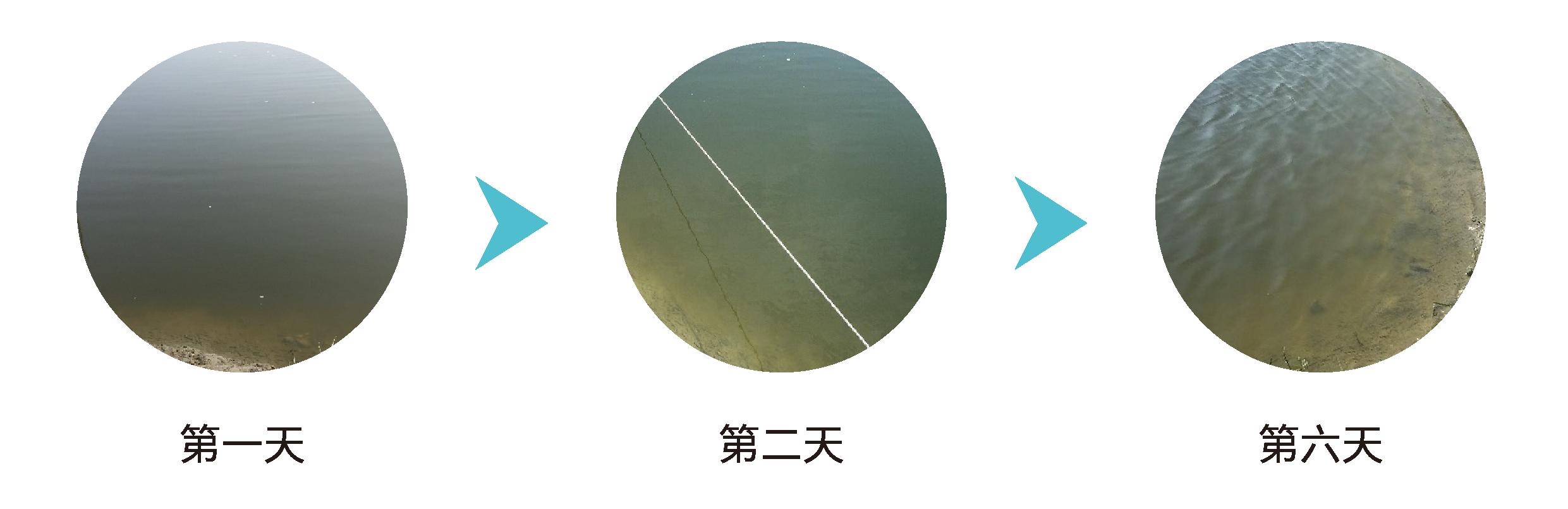 水益旺™水質改良劑可顯著改善魚池之水色